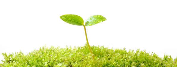 CSR・環境・社会貢献 | Sony Net...